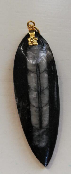 Orthoceras Paleozoicum